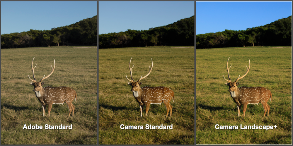 The default Camera Calibration profile is Adobe Standard which creates a dull and lifeless image. Adjust the profile to match your camera settings.