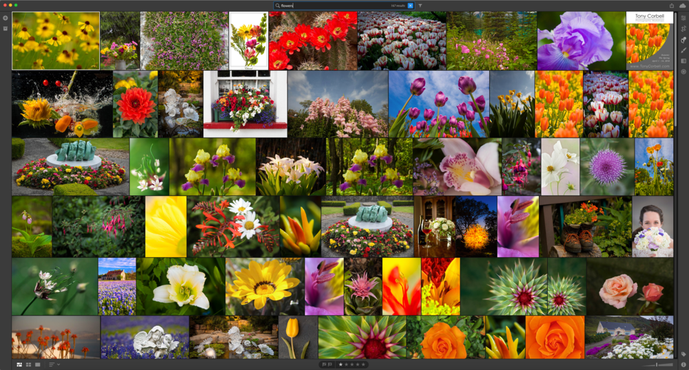 "©Rob Hull - This is the new Photo Grid in Adobe Lightroom CC. I simply typed ""Flowers"" in the search bar and Adobe Sensei returned this assortment of images very quickly. Note, I have NOT added keywords to most of these images. The artificial intelligence used in this product evaluated all my images and determined which included flowers. Pretty impressive."