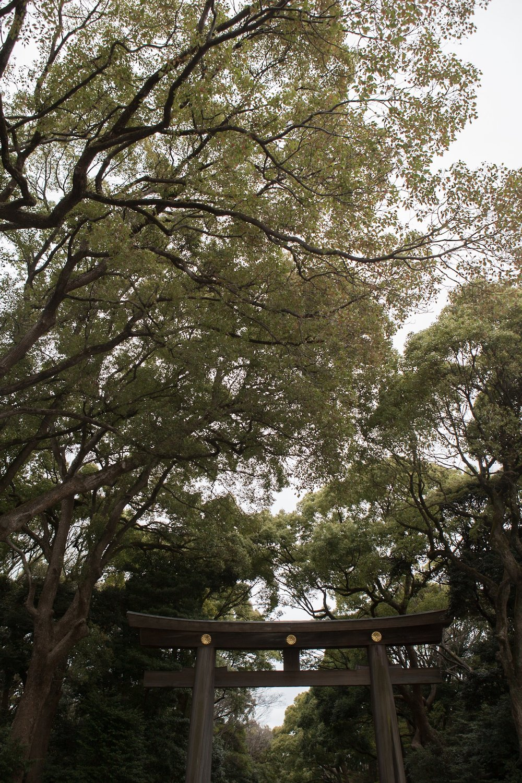 Greenery at the Meiji Shrine