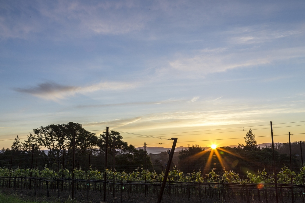 Sunrise, Tilton Hill Vineyard, March 2015