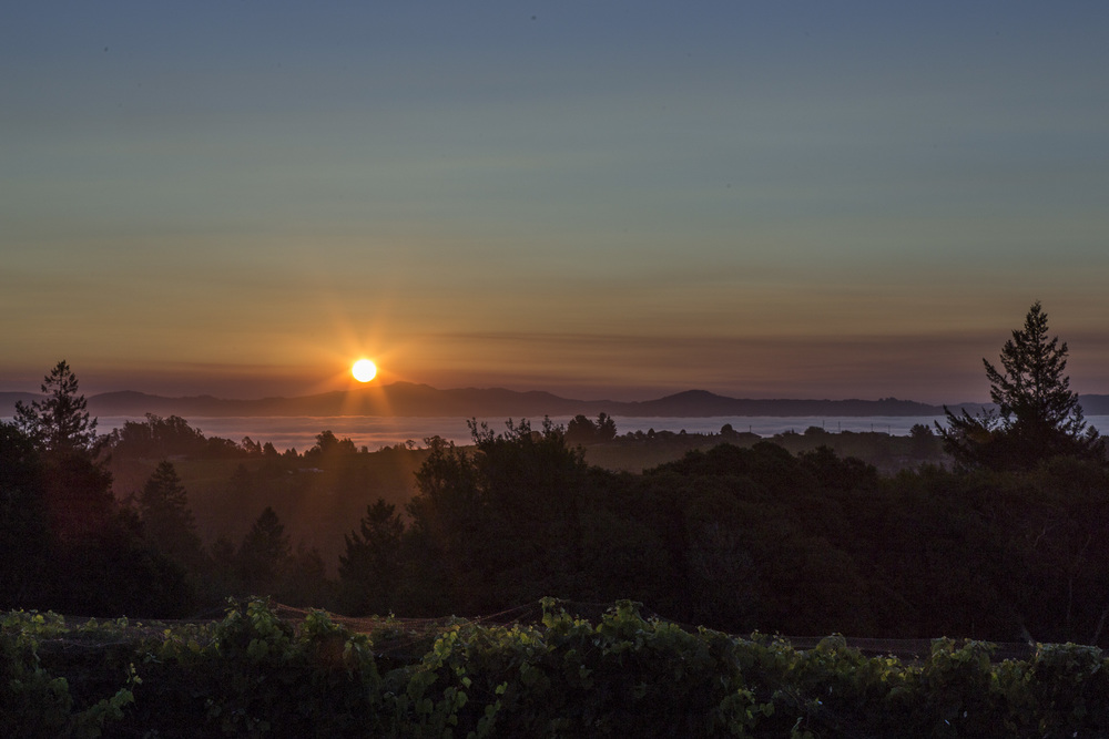 Sunrise on the brink of harvest, Tilton Hill Vineyard, August 2015