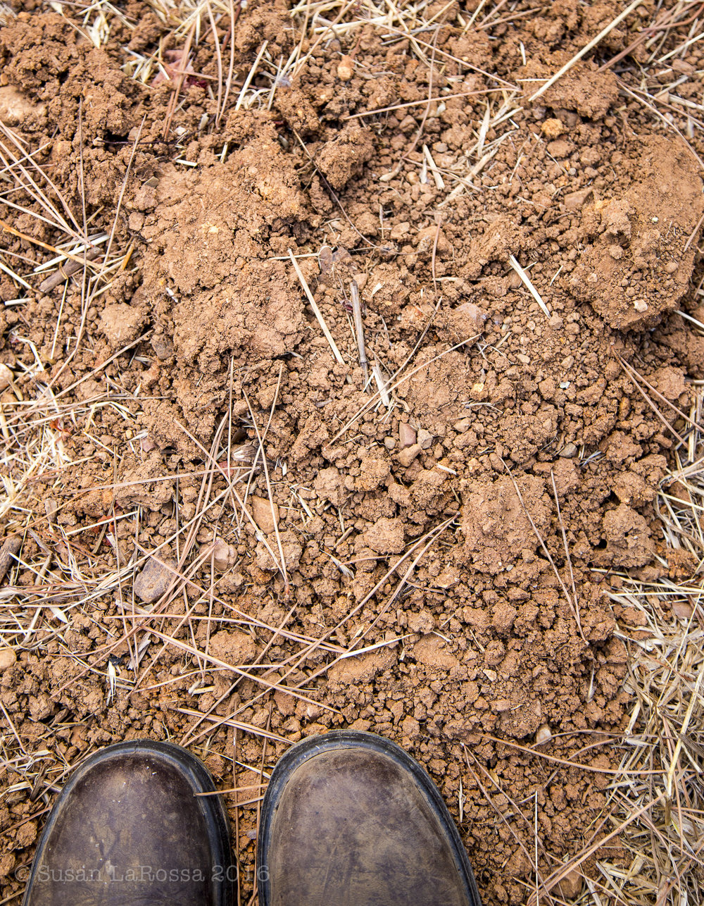 Haire Clay soil in Castelli-Knight Vineyard