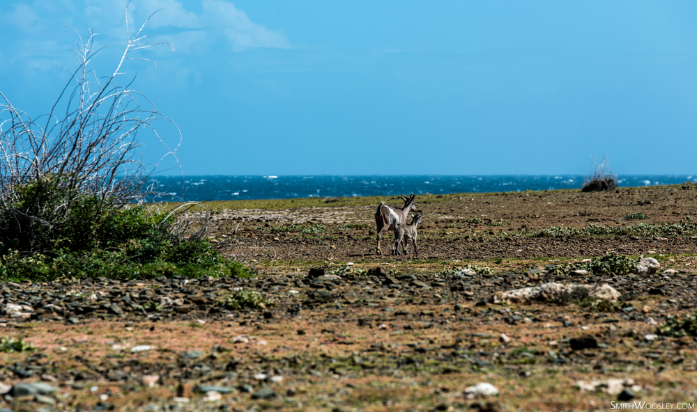 Arikok Donkeys.jpg
