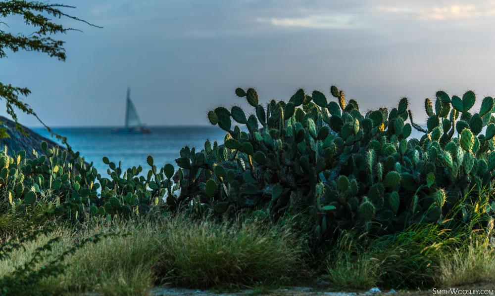 Boca Catalina Boat 2.jpg
