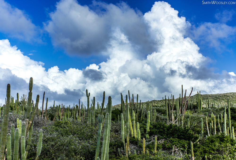 Paradera Cactus.jpg