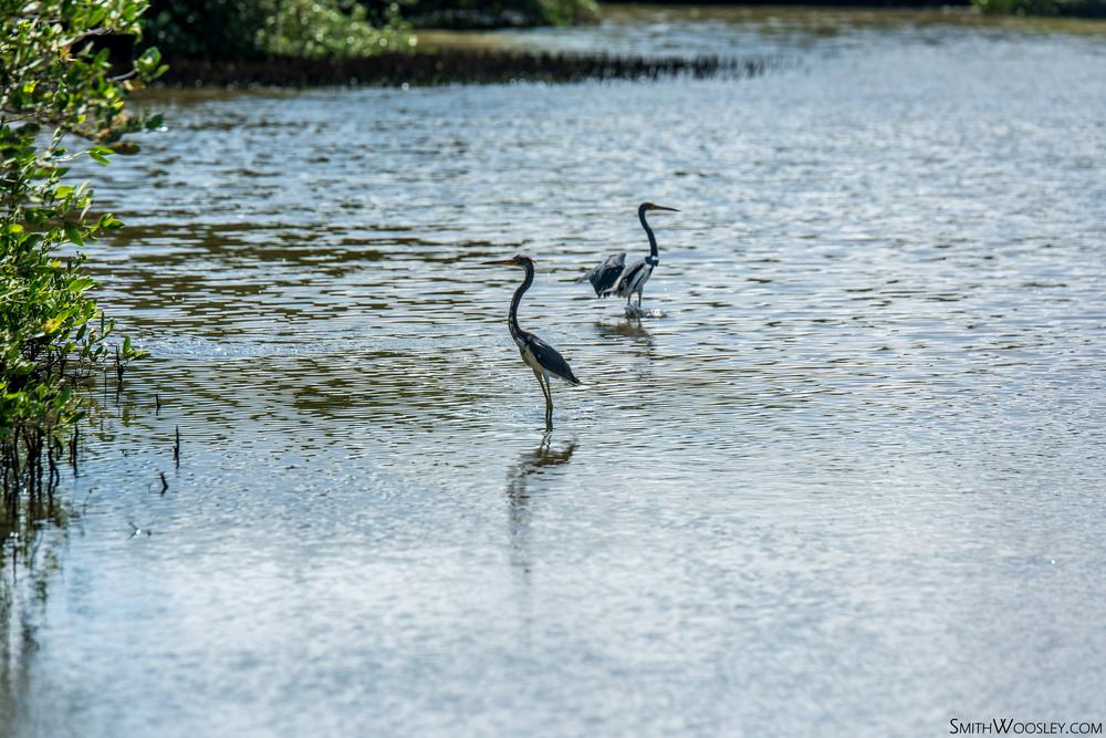Spanish Lagoon Birds.jpg