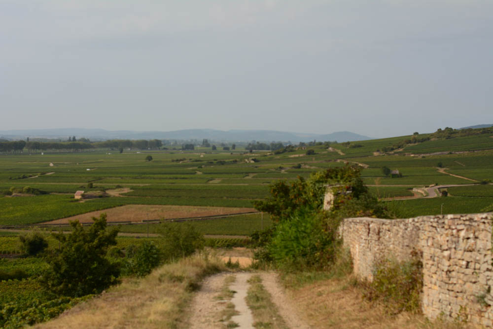 rolling-hills-burgundy-vineyards.jpg
