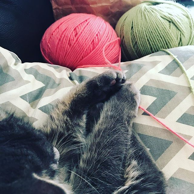 Not actually helping @catnamedearl but this is an improvement to sitting on my chest while I'm trying to knit!  Seems like it's not just me keen to get my paws on @bendigowoollenmills #baby #handknit #catsofinstagram