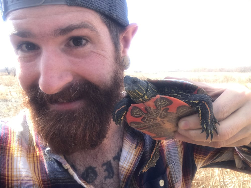 Owner, operator and head-beekeeper KJ Tencza with a painted box turtle he found by the Illuman Apiary hives.