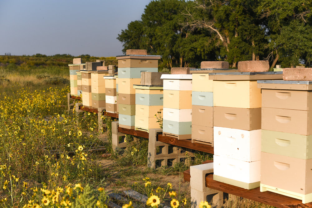 On a good year all you can see are wildflowers around the hives.
