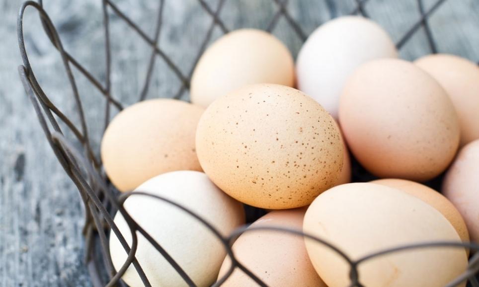 eggs_4_74.jpg
