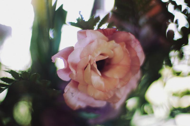 Flowers Aug 5 06.jpg