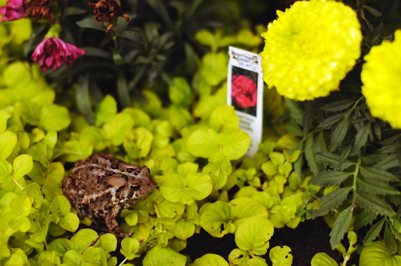 Garden June 18 06.jpg