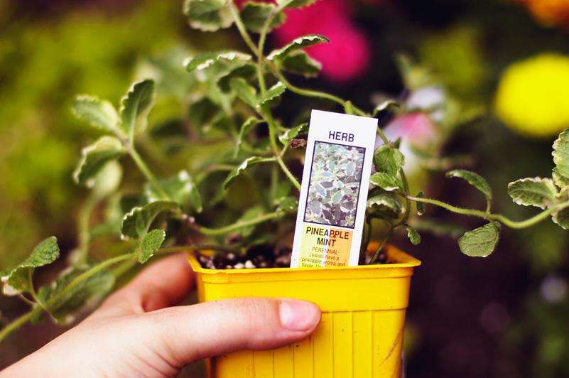 Gardening May 23 08.jpg