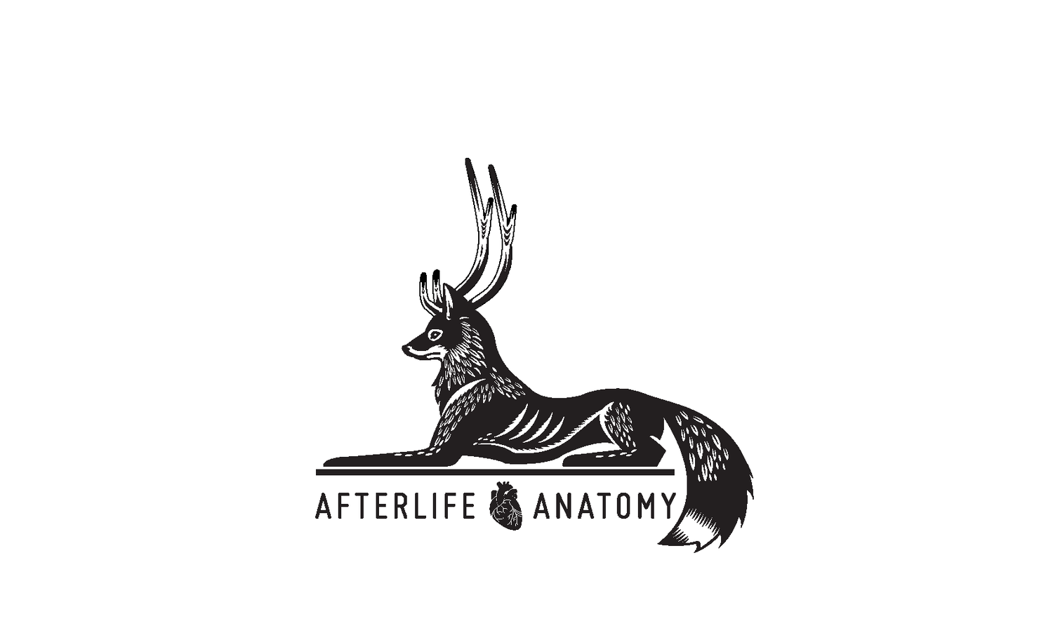 afterlife anatomy
