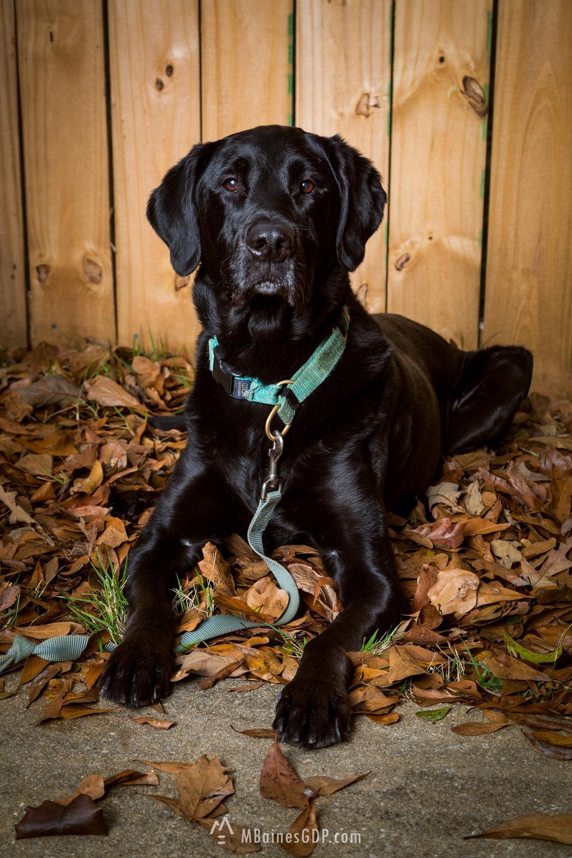 Titus - A Girls Best Friend
