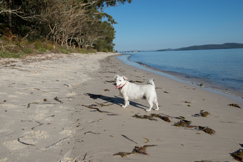 Walking along the beach with our dog- she loves this place! Also, walking on dry sand is not easy!