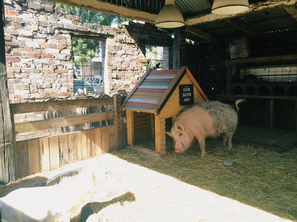 Kevin Bacon the pig and his house