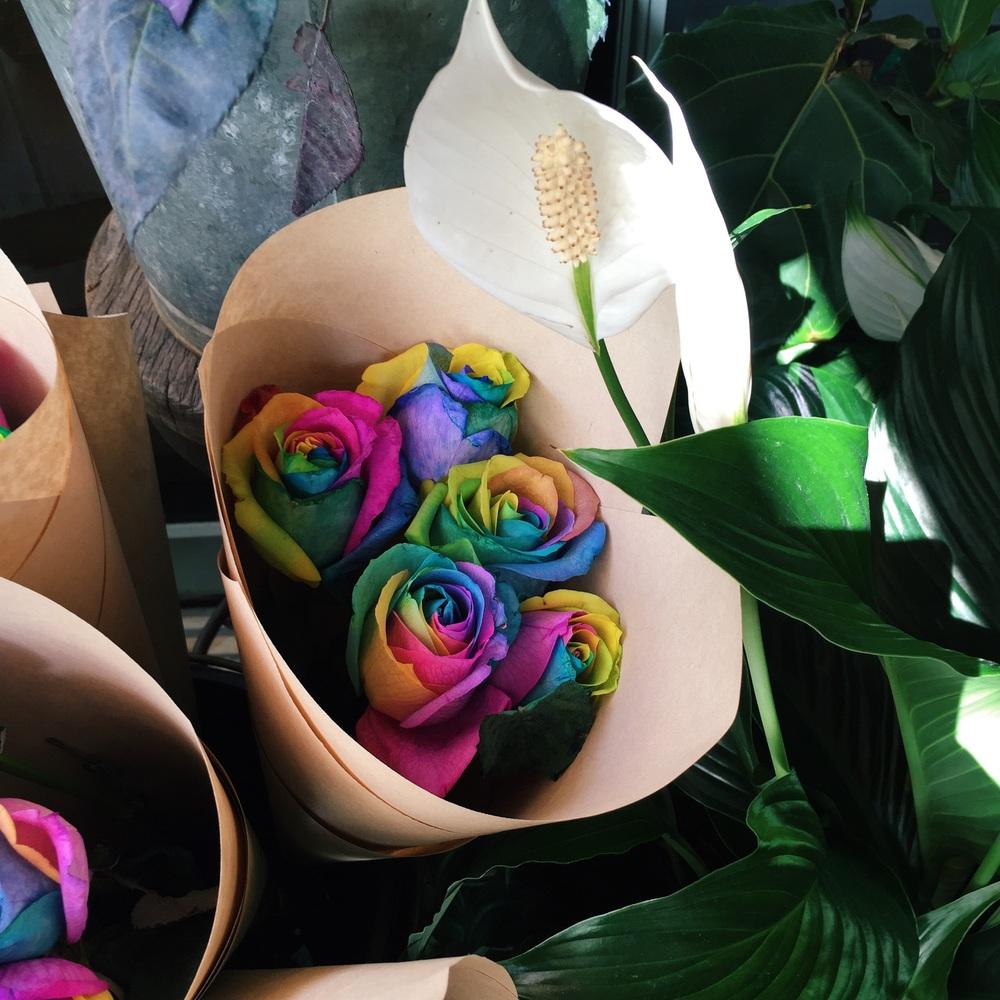 Rainbow roses- amazing!