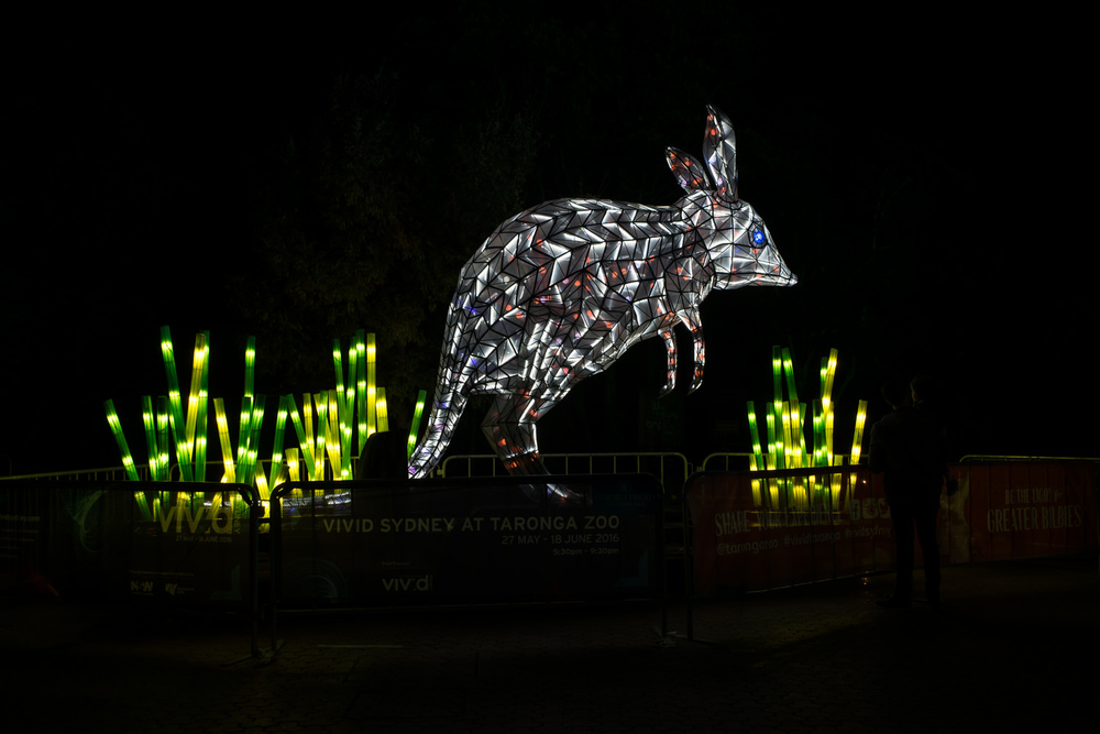 Giant Bilby light at Taronga Zoo during Vivid