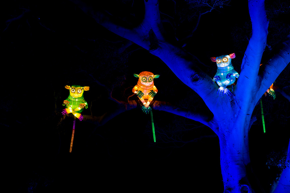 Vivid monkey lights in the trees at Taronga Zoo