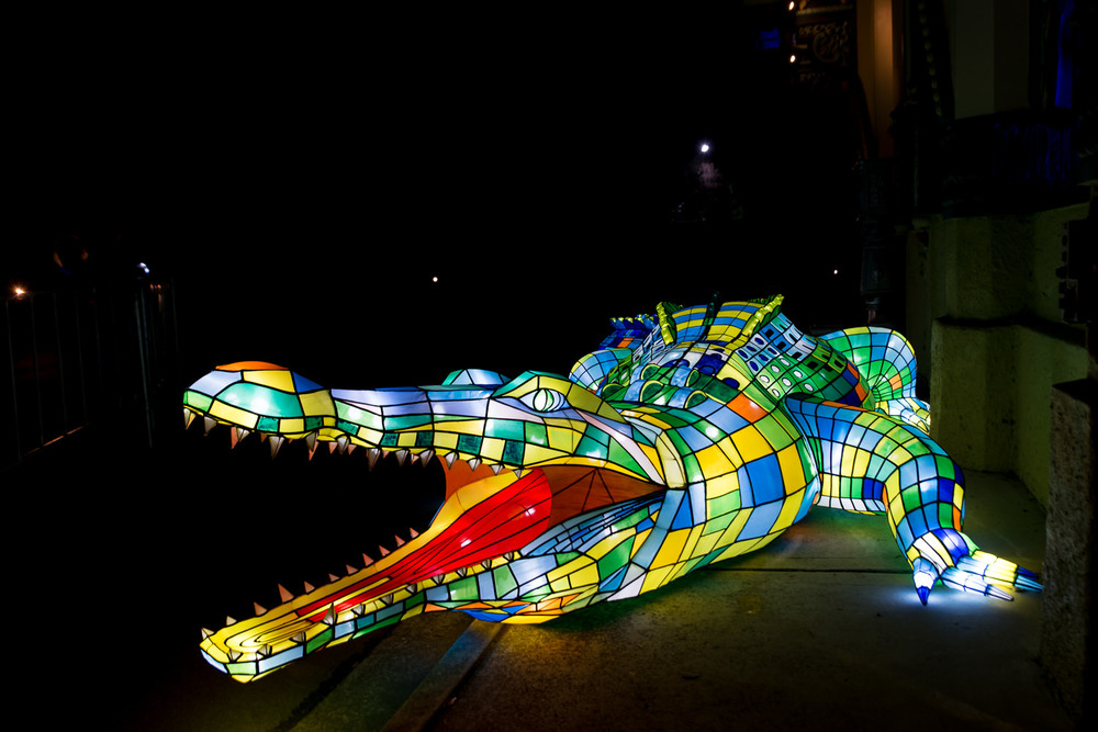 Crocodile at Taronga Zoo during Vivid