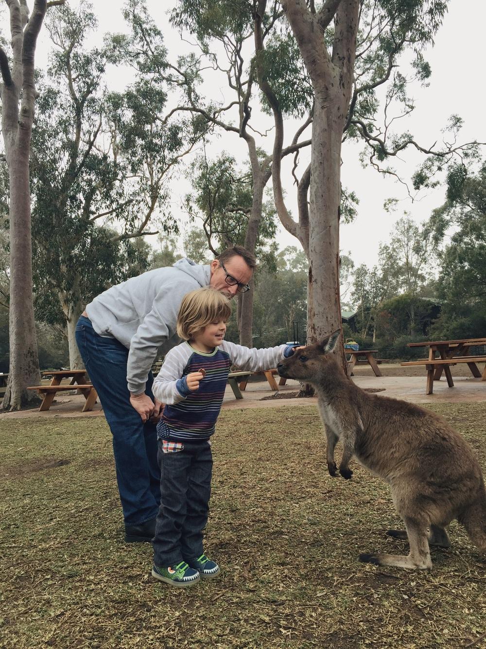 Mr 3 patting the kangaroo