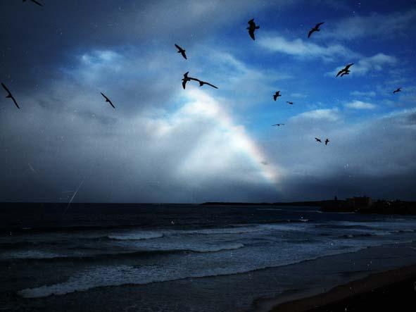 surfcheck….gulls in the wind….