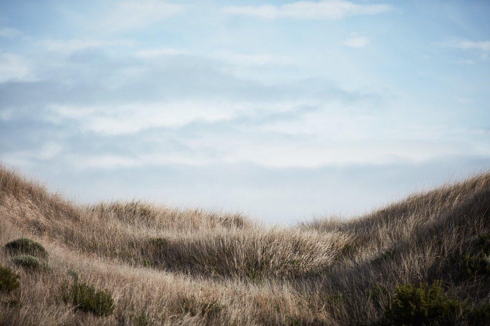 Dune grass art