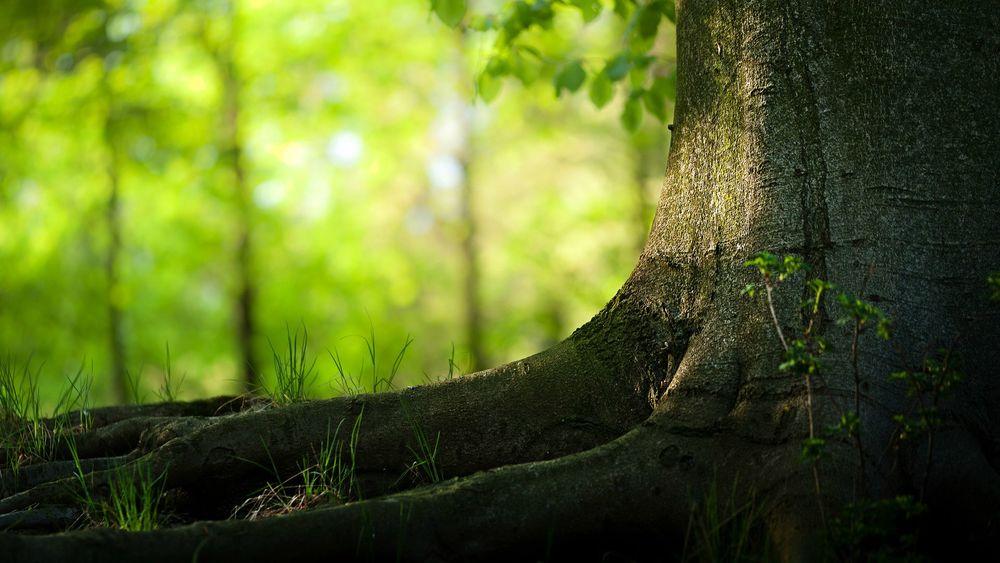 The-foot-of-big-tree.jpg