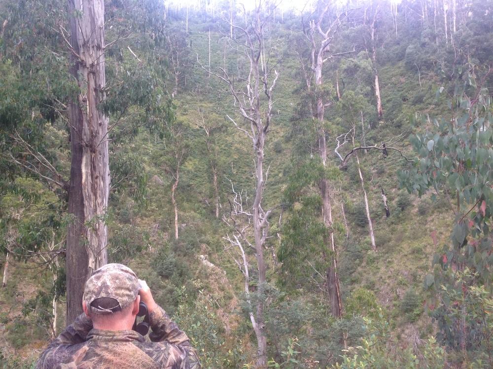 Following the progress of a deer down the far ridge.