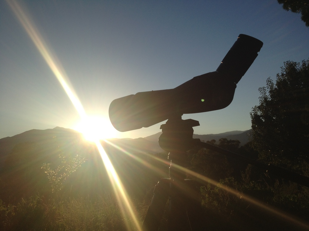 """Dawn in """"our"""" mountains... Spotting deer as they feed in the morning light."""