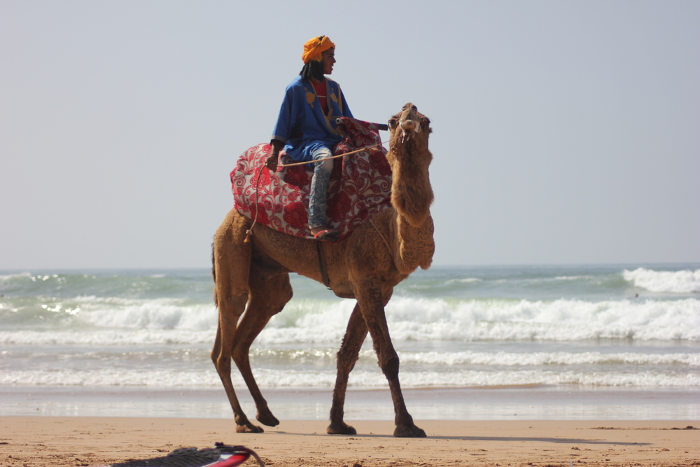 Beachside camel