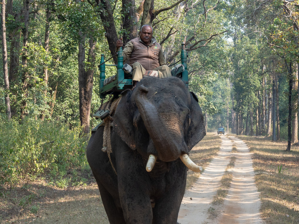 Mahout and whole elly.jpg