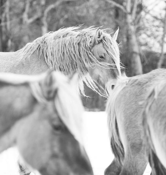 fotos-caballos-irenebel