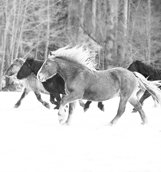 irenebel-horse-photo