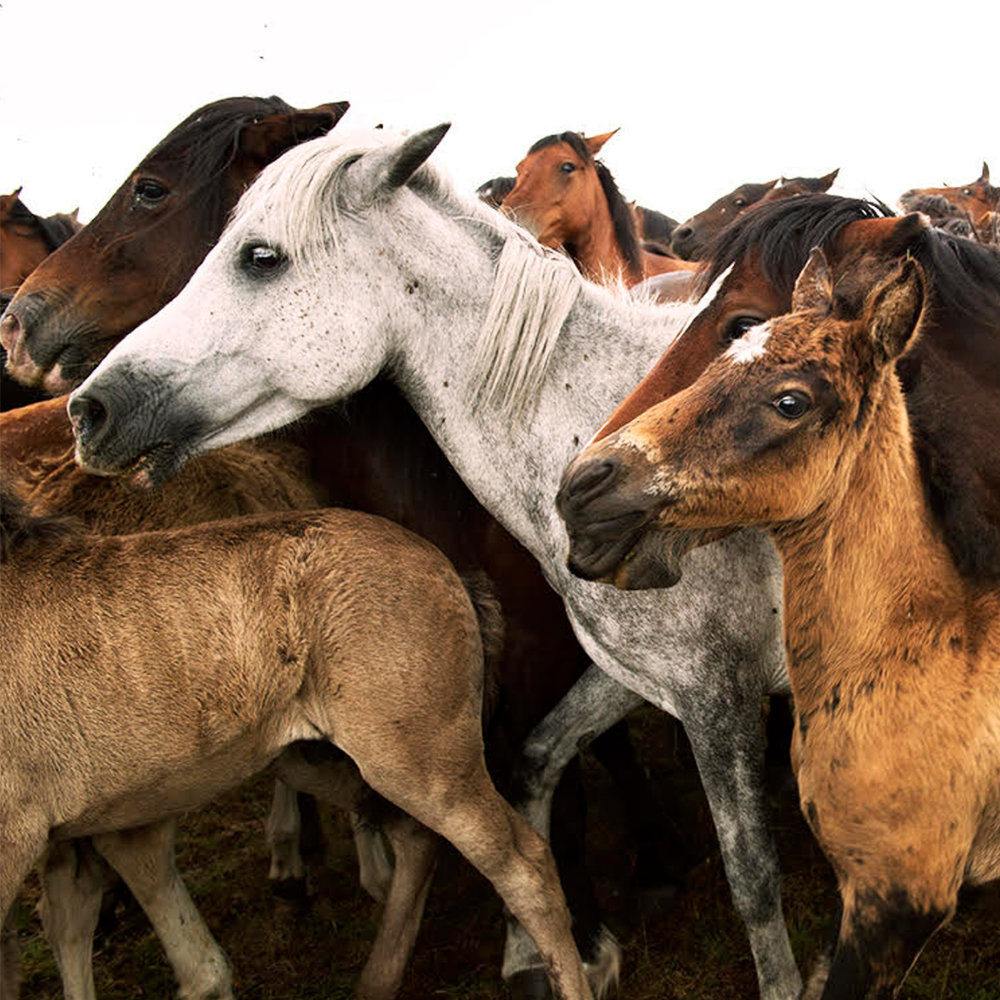Horse-sabucedo.jpg