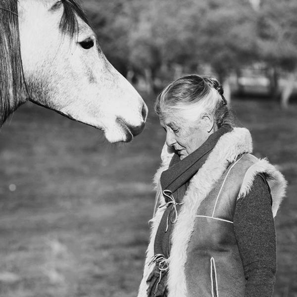 caballos arabes horses lis