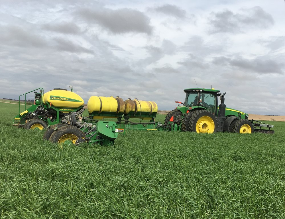 "John Frey plants corn ""green"" into 18"" tall cereal rye near Albion.  Planting green allows you to get more growth and benefit out of the cover crop in a year where growing conditions for the cover have not been optimum"