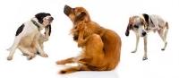 Dogs (multiple).jpg