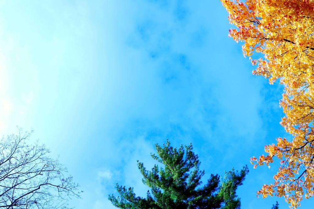 champaign-trees.jpg