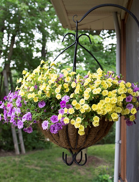 drip into hanging basket.jpg