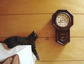 振り子のコチコチ催眠術? この後、猫は眠ってしまいました。