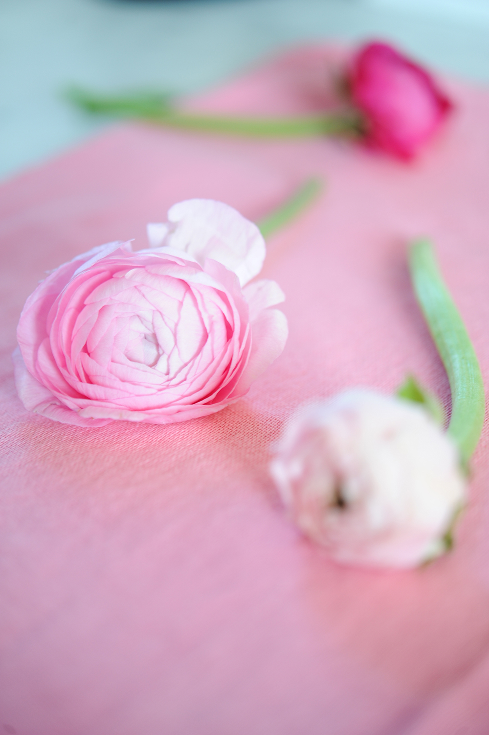 Fleur 4 Tracey Ayton Photography