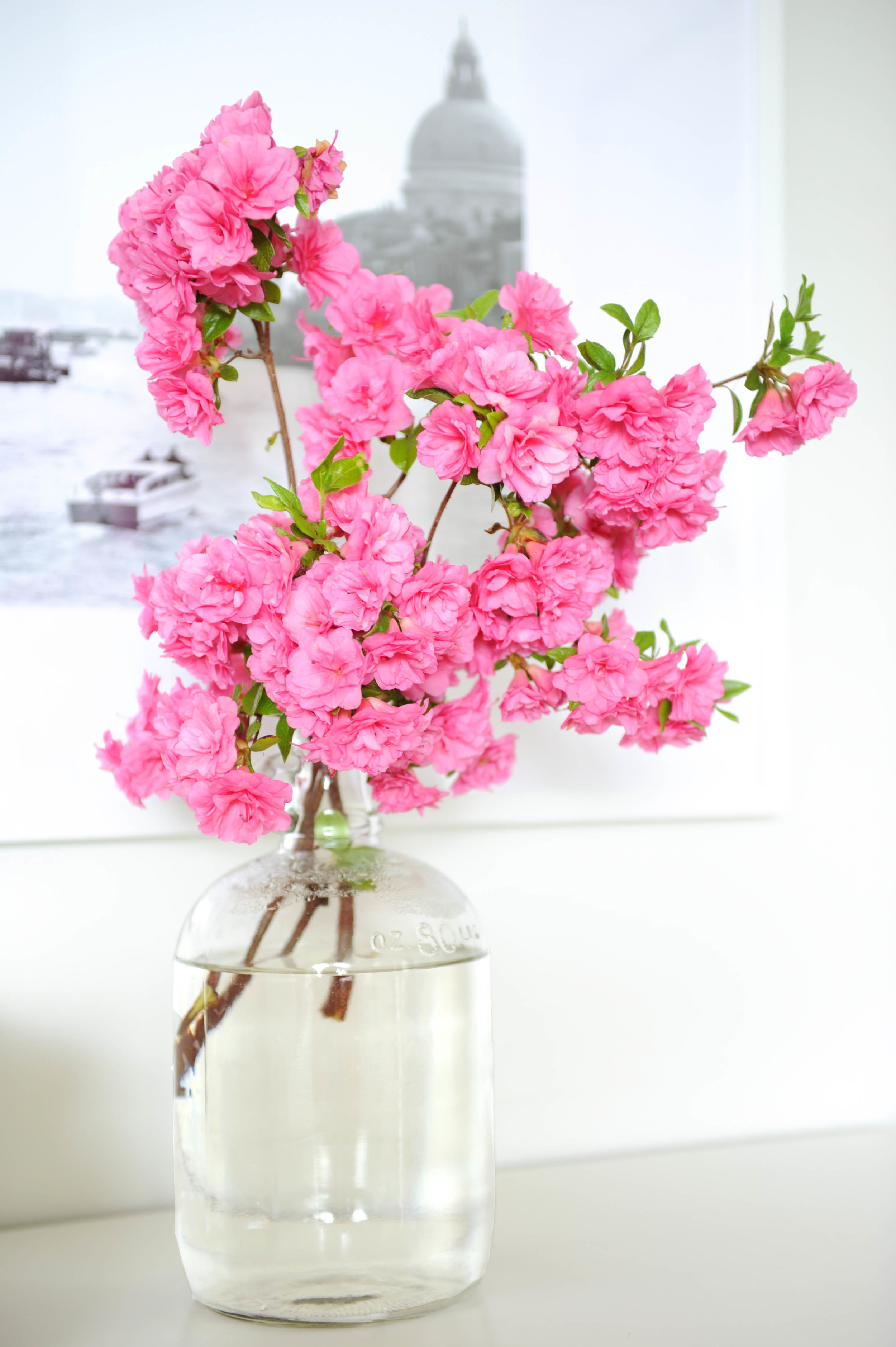 Fleurs www.traceyaytonphotography.com