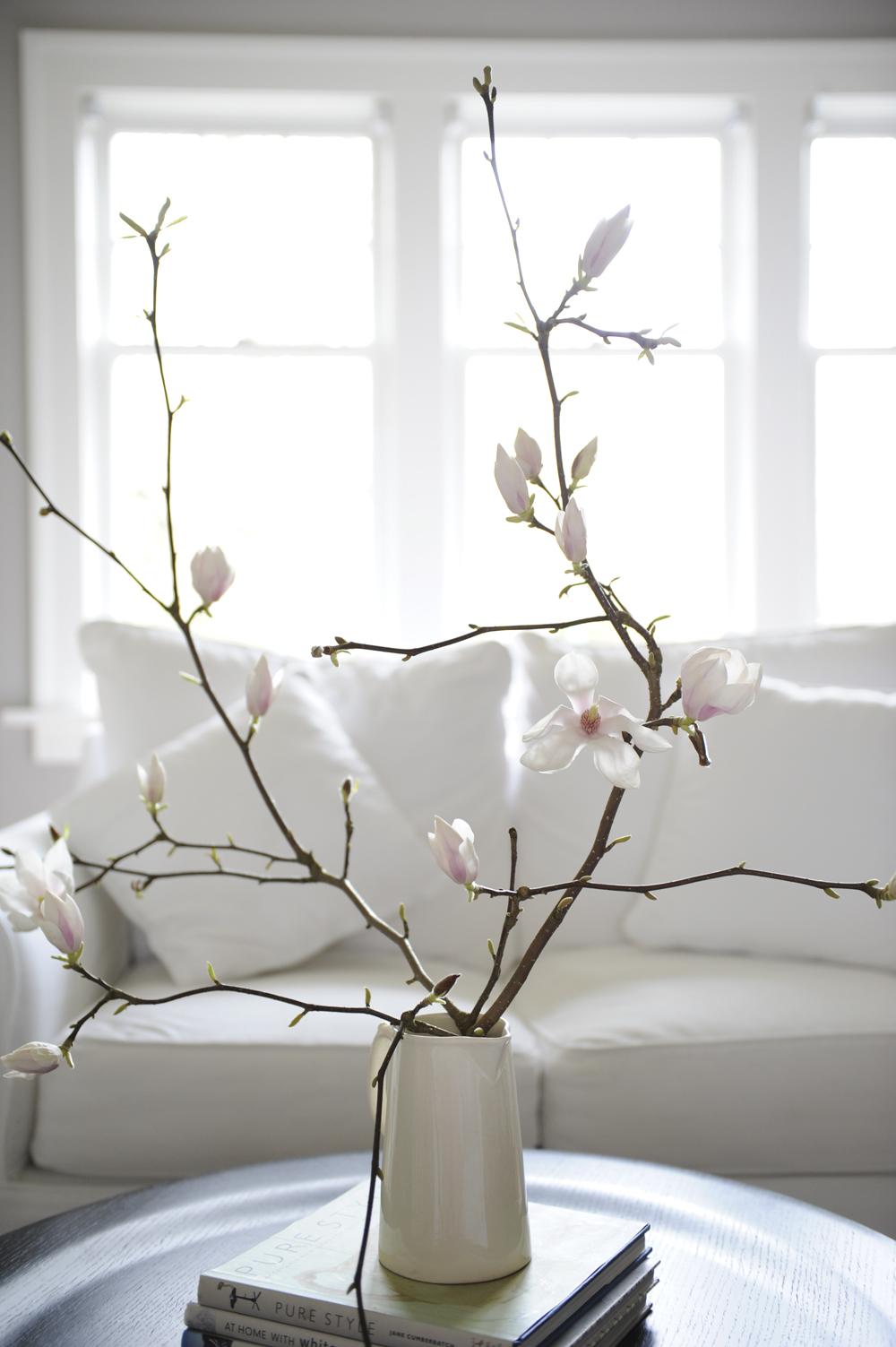 magnolias 2 Tracey Ayton Photography