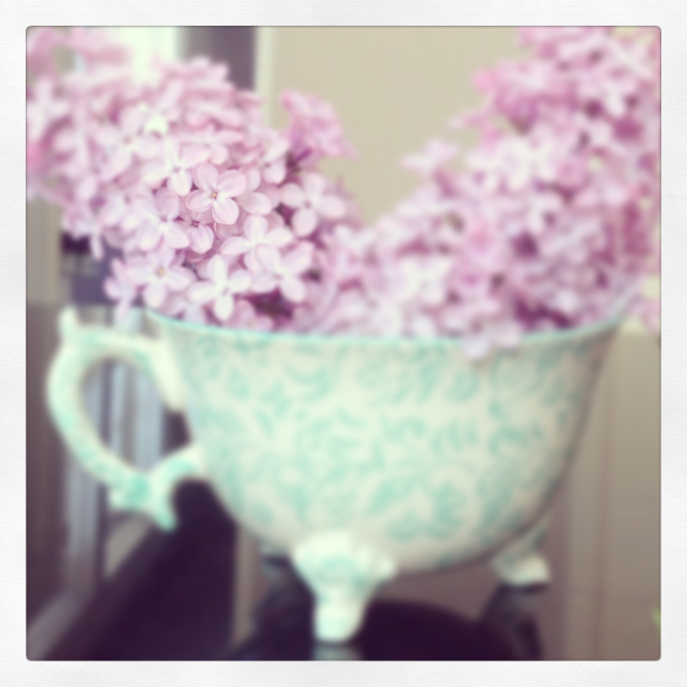 Lilacs Tracey Ayton Photography