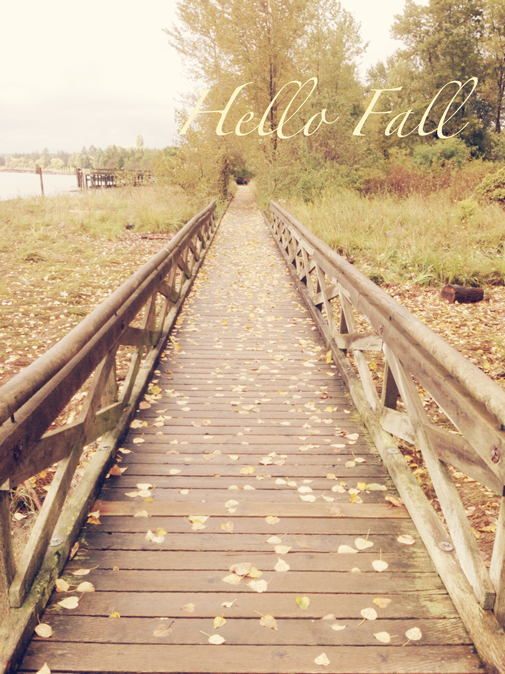 Tracey Ayton Photography Hello Fall