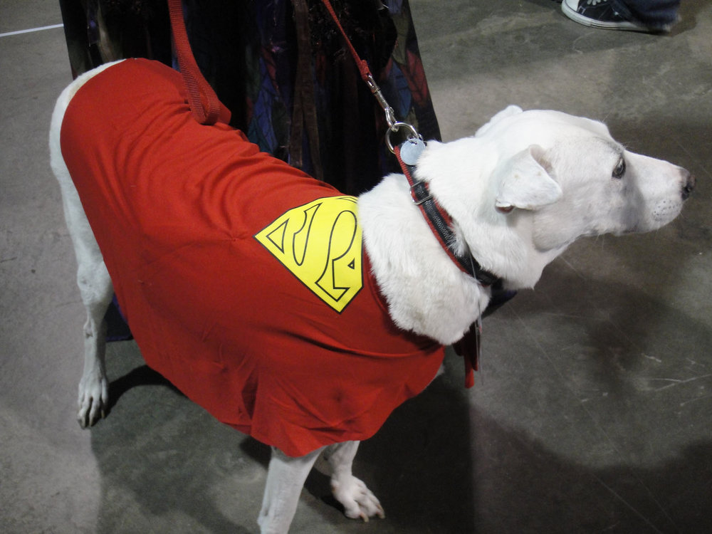 Long_Beach_Comic_&_Horror_Con_2011_-_Krypto,_the_Super_Dog_(6301707368).jpg