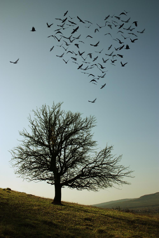 BIRDSHEARTTREE.jpg
